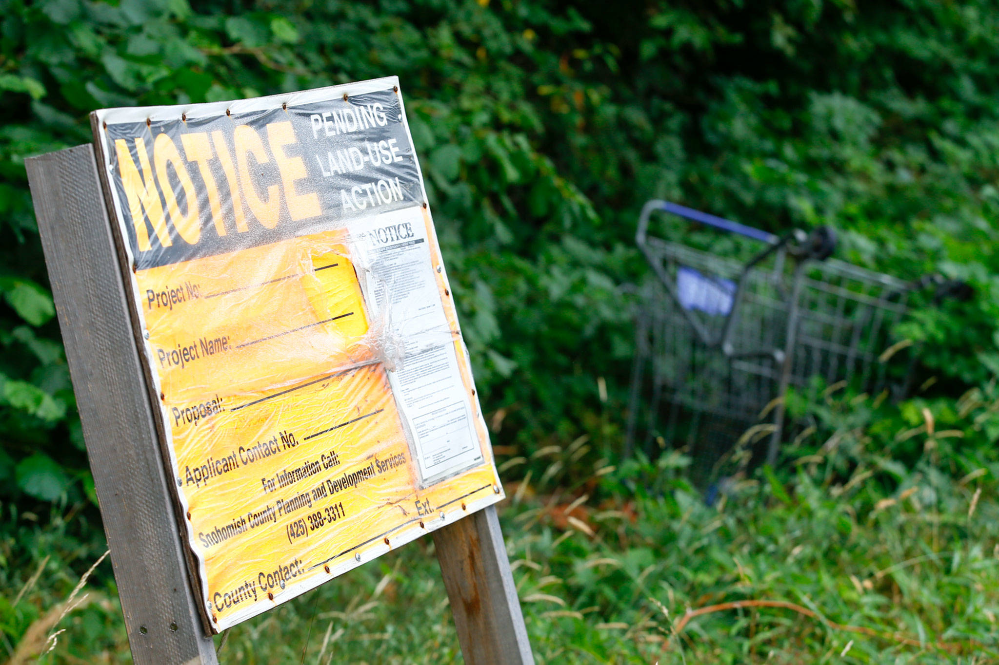 The greenbelt where the McCollum Park John Doe was found in a shallow grave is under notice for development. (Kevin Clark / The Herald)