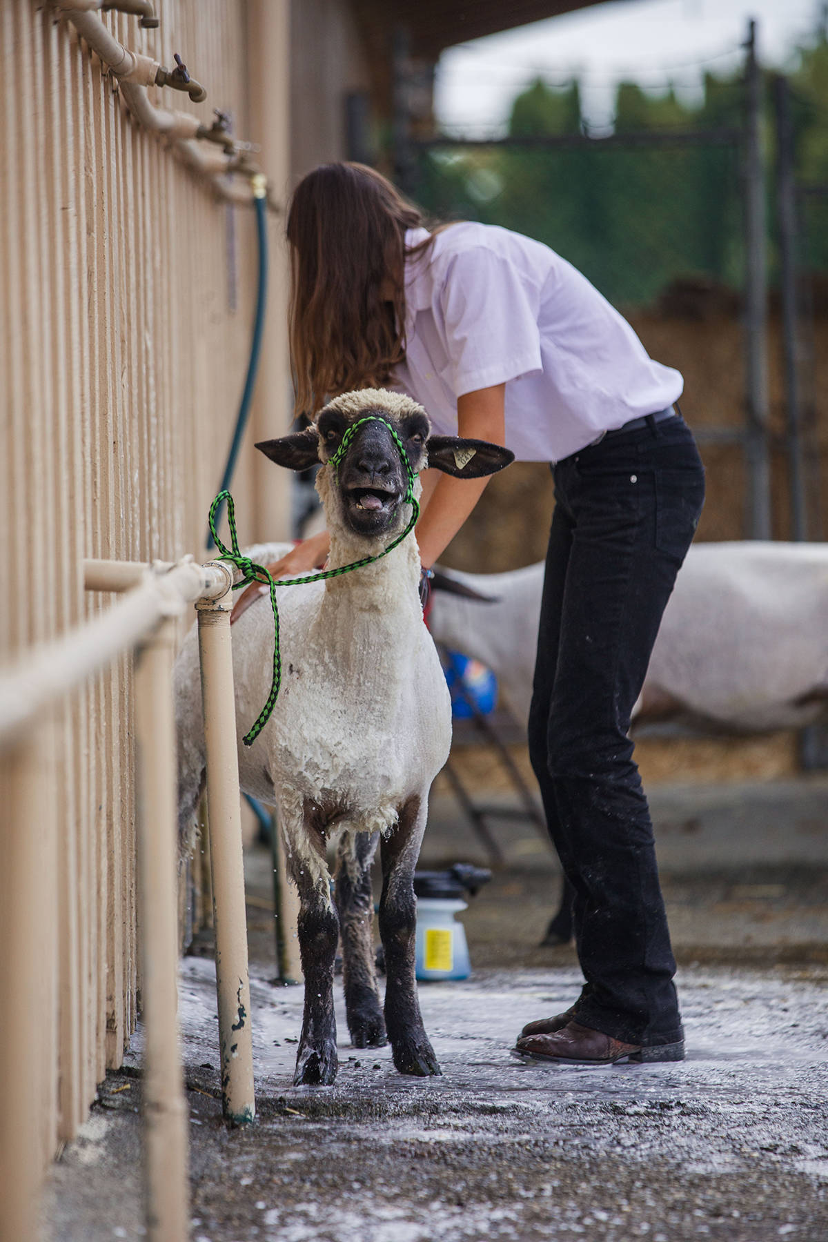 Don't miss the chance to see the 4H Club and FFA kids and their prize winning animals