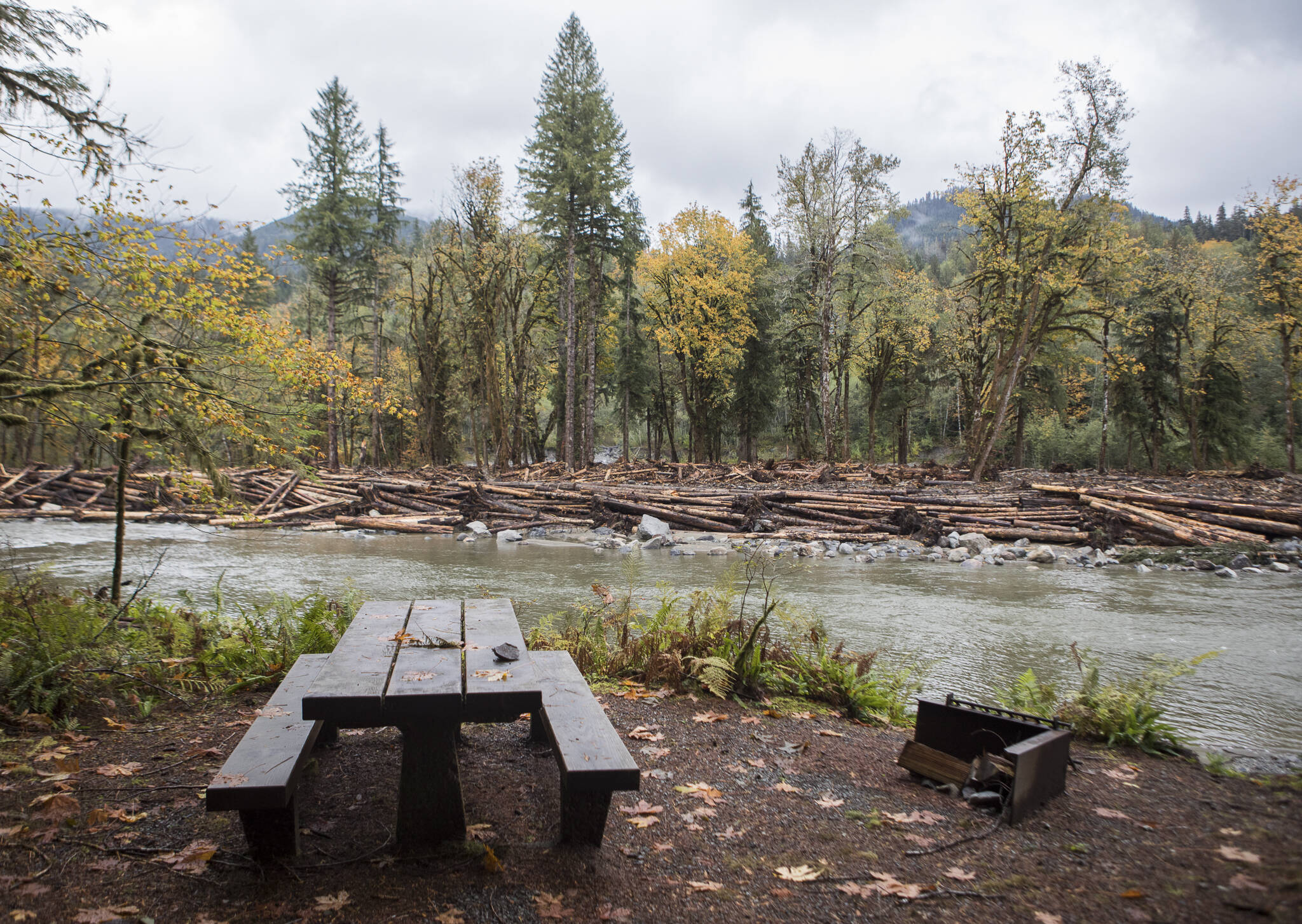 A large woody material jam, made out of logged trees, is visible from a new river-side campsite at the Gold Basin Campground on Wednesday in Verlot. (Olivia Vanni / The Herald)